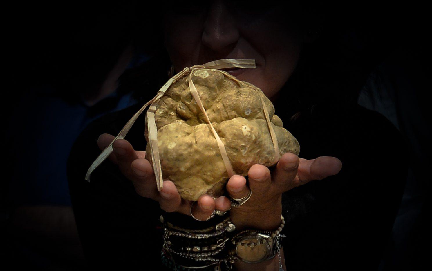 i-geni-del-profumo,-sequenziato-il-dna-del-tartufo-bianco-truffle-eat