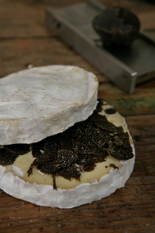 truffle-recipes-truffle-cheese-truffleat-creamy-brie,-camembert.