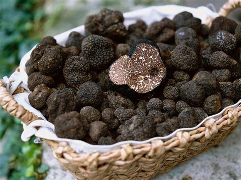 fettuccine-al-tartufo-nero-di-alba-ancora-sul-mercato-fino-alla-fine-di-agosto.-truffleat